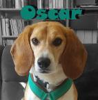 Oscar der Beaglebubs Avatar
